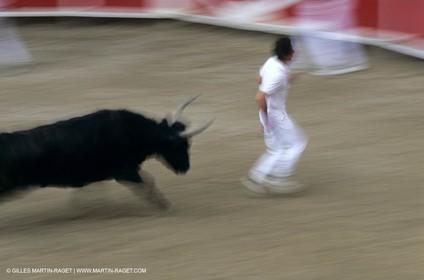 Gard, (FRA,30) - Camargue bull game
