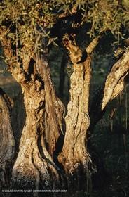 olive0106.jpg