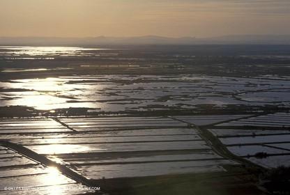 Camargue Rice fields