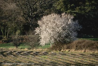 France, Provence, Paysages du Luberon, Luberon Landscapes
