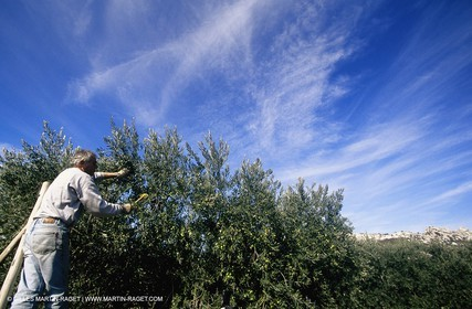olive0126.jpg