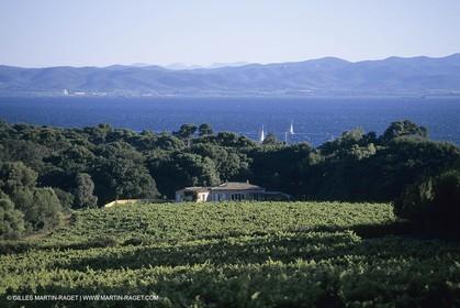 Vin, Vigne , Vendanges, vignification, vignobles, France, Provence, Côte du Rhône, Rosé