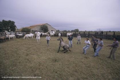 France, Provence, Camargue, Gardians de Camargue, métier, fêtes, élevage, tri