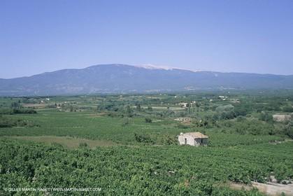 France, Provence, Vignobles des vins de Provence