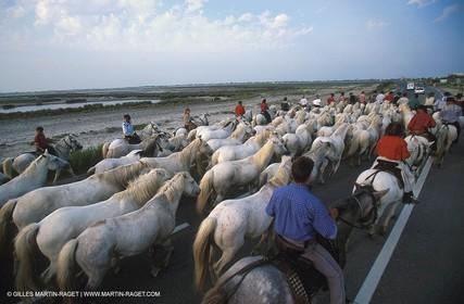Arles - Camargue gardians (cow boys) at work