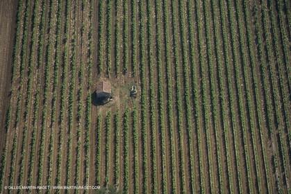 France, Provence, Pays d'Aix en Provence, vignoblmes des coteaux d'Aix, Côtes de Provence